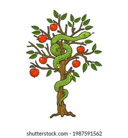 biblical serpent snake on apple tree color line art sketch engraving vector illustration. T-shirt apparel print design. Scratch board imitation. Black and white hand drawn image.