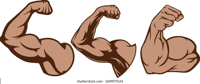 Biceps muscle of the shoulder of a man vector