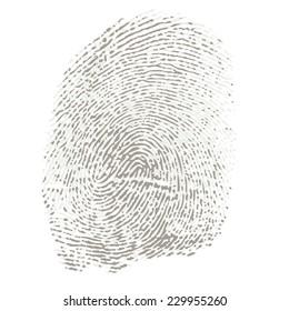 Bicolored Fingerprint of a Thumb