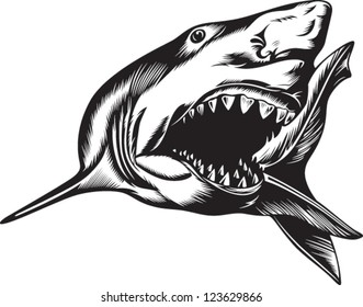 Big aggressive shark with open mouth