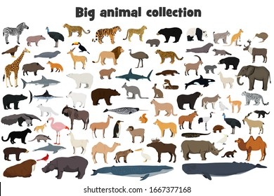 Big animal collection. Set of wild forest, arctic and antarctic, jungle, mountain, african, australian animals, marine mammals, birds, fish. Isolated on white background. Realistic animals. Stock vect