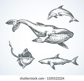 Big atlantic flipper baleen breach on white aqua backdrop. Freehand outline black ink hand drawn large zoo fin beast character pictogram logo emblem in art retro doodle cartoon style pen on paper