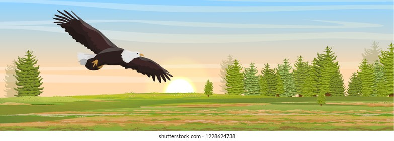 The big bald eagle flies over the valley and the fir forest. Animals of North America. Realistic Vector Landscape