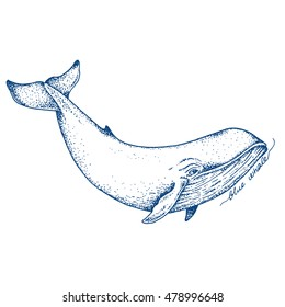 Big blue whale - vector hand drawn illustration. Huge swimming aquatic mammal ink sketch