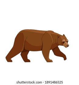 Big brown bear walking. Cartoon flat style vector illustration isolated on white background.