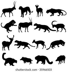Big cats leopards and their prey of herbivores