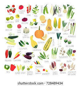 Big clip art collection with various kind of tomatoes, peppers, squashes and other vegetables
