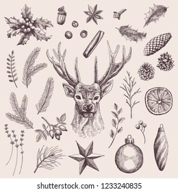 Big collection of 30 Christmas elements. Vintage illustrations of holly plant, deer, spices, leaves, spruce and pine cones, twigs, Christmas balls, star, orange, rose hips, lavender and berries.