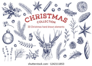 Big collection of 30 Christmas elements. Vintage illustrations of holly, deer, spices, leaves, spruce and pine cones, branches, Christmas balls, star, orange, rose hips, lavender, acorn and berries.