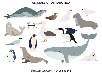 Big collection of adorable wild animals of Antractica. Bundle of cute funny cartoon Antarctic marine mammals and seabirds isolated on white background. Colorful vector illustration in flat style.