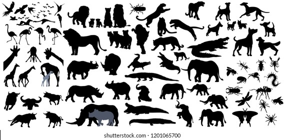 Big collection of animals,birds and Big 5 of the world.Big fauna of the world icon set.Vector illustration isolated on white