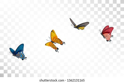 Big collection of colorful flying butterflies isolated on transparent background. Wedding, 8 march women day celebration decoration elements set vector illustration. Spring and summer sale design.