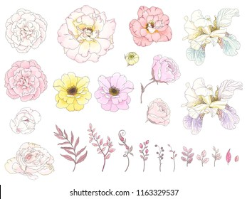 Big collection of floral elements with hand drawn outline. Vector illustration roses, fleur de lis, leaves and branches in pastel colors. Tender flowers for your design.