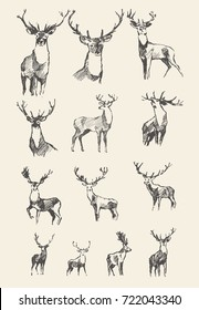 Big collection of a hand drawn noble deers, vector illustration, sketch