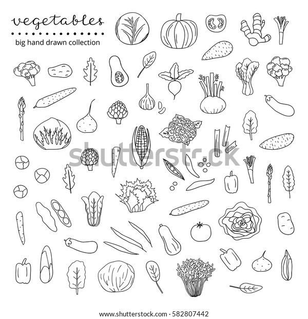 Big collection of hand drawn outline vegetables and leafy greens isolated on white background.