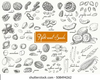 Big collection of isolated nuts and seeds on white background. Vector illustration for your design