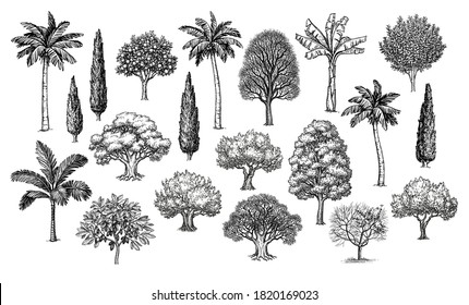 Big collection of trees. Ink sketches set isolated on white background. Hand drawn vector illustration. Retro style.