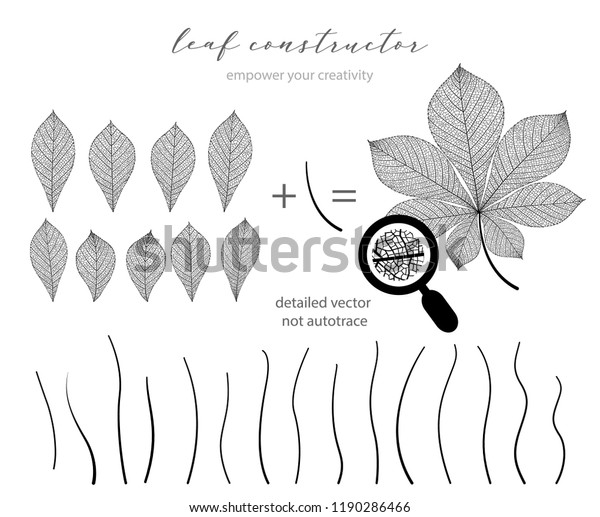 Big collection of vector branch and chestnut leaf, fall, spring, summer. Detailed macro illustration, not autotrace, constructor design