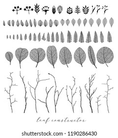 Big collection of vector branch and  eucalyptus leaf, autumn, spring, summer. Detailed macro illustration, not autotrace, constructor design