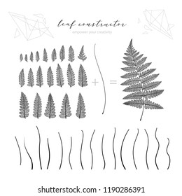 Big collection of vector branch and fern leaf, fall, spring, summer. Detailed macro illustration, not autotrace, constructor design