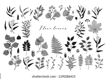 Big collection of vector branch and leaf, autumn, spring, summer. Detailed macro illustration, not autotrace, constructor design