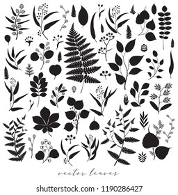 Big collection of vector branch and leaf, fall, spring, summer. Detailed macro illustration, silhouette design