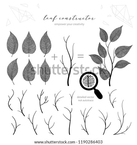 Big collection of vector branch and leaf, fall, spring, summer. Detailed macro illustration, not autotrace, constructor design