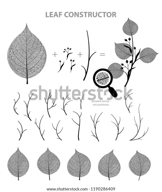 Big collection of vector branch and linden leaf, fall, spring, summer. Detailed macro illustration, not autotrace, constructor design