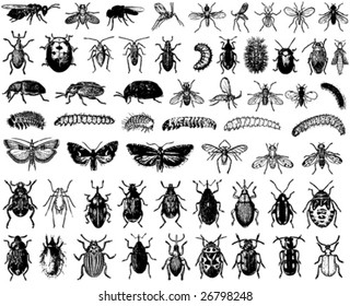 big collection of vector insects
