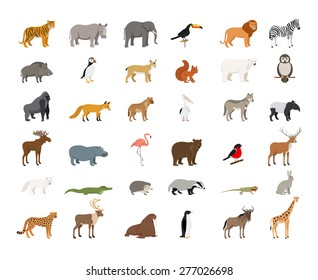 Big Collection of  Wild Animals