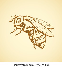 Big cute wild bee isolated on white backdrop. Freehand outline brown ink hand drawn picture sketchy in art scribble retro style pen on paper. Closeup micro view with space for text on sky