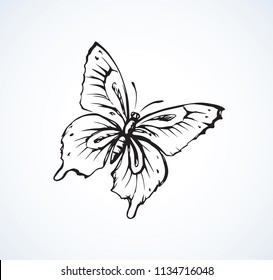 Big cute wild fly hexapod bug isolated on white backdrop. Freehand linear black ink hand drawn logo in art retro scribble design style pen on paper. View close up with space for text on light sky
