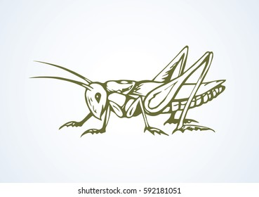 Big cute wild garden grig on light backdrop. Freehand outline black ink hand drawn picture logo sketchy in art scribble retro style pen on paper. Closeup micro view with space for text