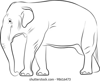 big elephant sketch - freehand illustration on a white background, vector