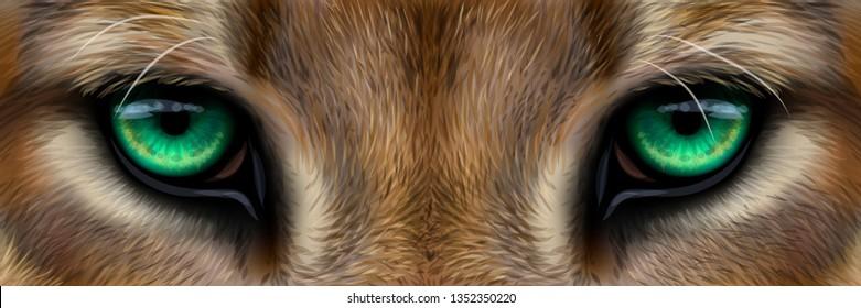 Big eyes. Green eyes of a mountain lion, cougar close-up.