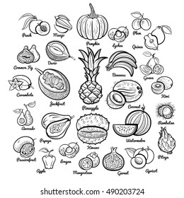 Big fruits collection. Pineapple, bananas, pumpkin, mango, passion, papaya, apple, melon, avocado, fig, kiwi, apricot, garnet, peach, plum, lychee and oth. Outline isolated sketch vector illustration