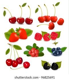 Big group of fresh berries. Vector illustration.