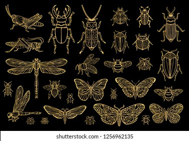 Big hand drawn golden line set of insects bugs, beetles, honey bees, butterfly; moth, bumblebee, wasp, dragonfly, grasshopper. Silhouette vintage gold sketch style vector illustration.
