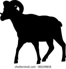 Big horn sheep silphoette