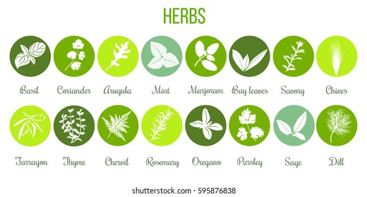 Big icon set of popular culinary herbs white silhouettes in color circles. Color background. Basil, coriander, mint, rosemary, sage, thyme, parsley etc. For cosmetics, store, health care, tag, label