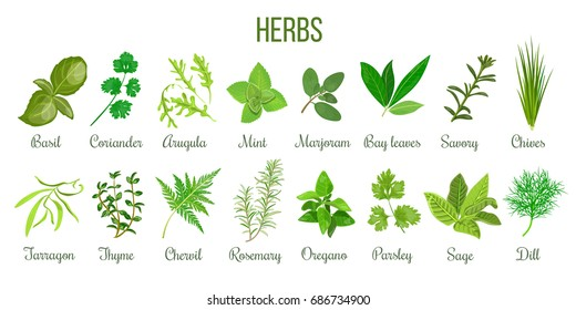 Image result for herbs