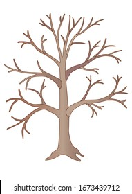 Big light brown tree without leaves - vector full color picture. A tree in winter or autumn without foliage with a trunk, branches and root.