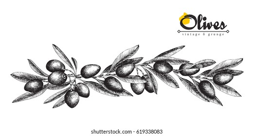 Big long olive branch sketch vector illustration isolated, vintage olives tree with leaves over white background. Italian cuisine.