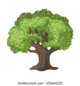 A big olive tree. The tree is olive green. The stem of the olive tree is wide brown.Olives single icon in cartoon style vector symbol stock illustration web.