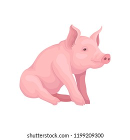 Big pink pig sitting isolated on white background. Farm animal with flat snout, hooves and big ears. Vector design