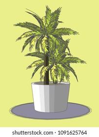 Big Potted palm plants, Vector & Illustration