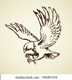 Big pride Hieraaetus accipitrine fly on white sky background. Freehand line brown ink hand drawn logo emblem sketchy in art vintage scribble graphic style pen on paper. Closeup view and space for text