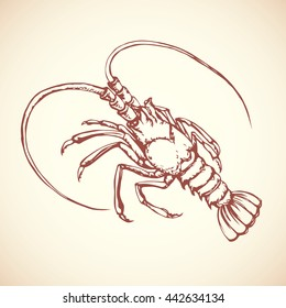 Big red anthropod panulirus mudbug isolated on white background. Freehand outline ink hand drawn picture sketchy in art scribble retro style pen on paper. Closeup view with space for text
