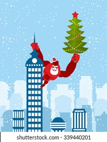 Big Red Gorilla dressed as Santa Claus climbs the building with Christmas tree in their hands. Wild beast with  beard and mustache. Monkey on skyscraper. Monkey is symbol of Chinese new year.