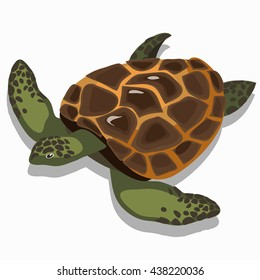 Big sea turtle isolated on white background. Animal of the tropical seas and oceans. Vector illustration.